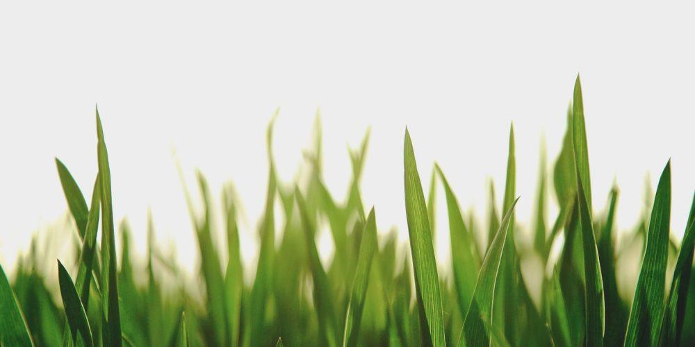 Wir sind das frische Grün!