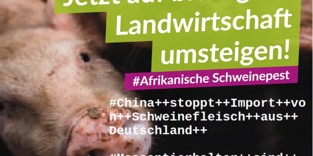 Afrikanische Schweinepest: Jetzt auf vegan umsteigen!