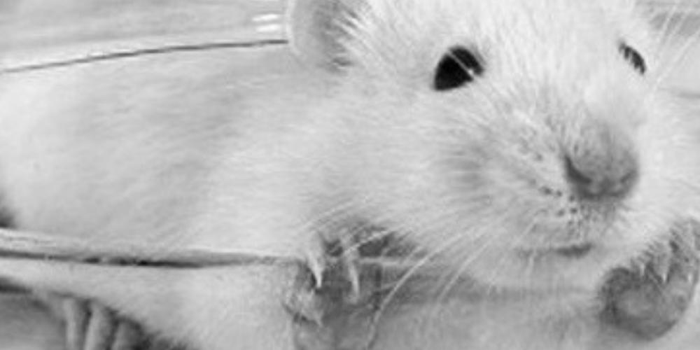 V-Partei³: Keine Tierversuche in Augsburg!