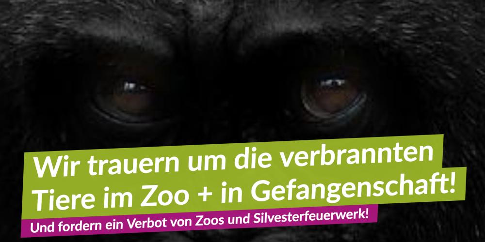 V-Partei³ verurteilt System Zoo und Silvesterfeuerwerk