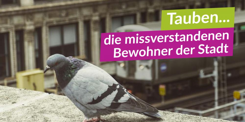 Tauben – ganz ohne Vorurteile